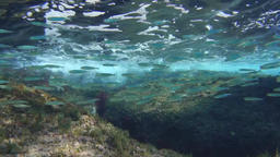 Swarm of small fishes underwater floating in the current Footage