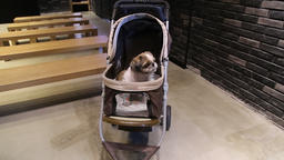 Dog in push chair Footage