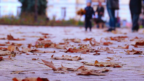Autumn. People Walking Footage