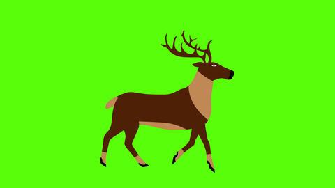 Cartoon Reindeer animation on Green screen Chroma key seamless loop, flat design Animation