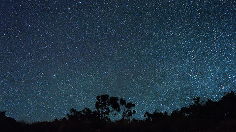 Panorama of forest in the background of the starry sky. TimeLapse Footage