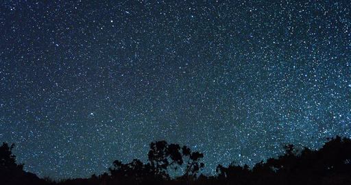 Starry sky behind the trees. Zoom. Time Lapse Footage