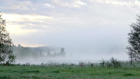 Thick morning fog over the marsh Footage