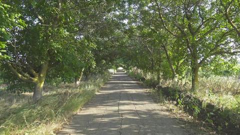 driving on road between trees, 4k Footage