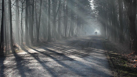 Road and sunbeams in strong fog in the forest, Poland Footage