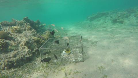 Environmental damage illegal fish net trap in sea Footage