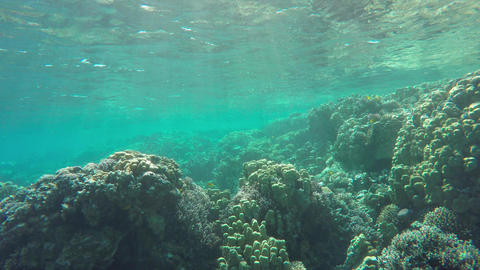 Many fish swim among corals in the Red Sea Footage