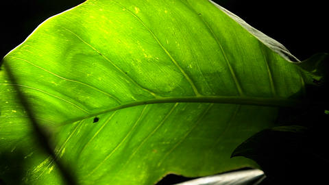 A Green Leaf stock footage