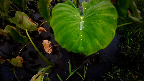 A green leaf with water droplet Stock Video Footage