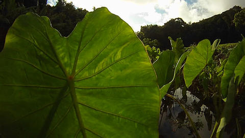 POV shot panning through green plants and leaves Stock Video Footage