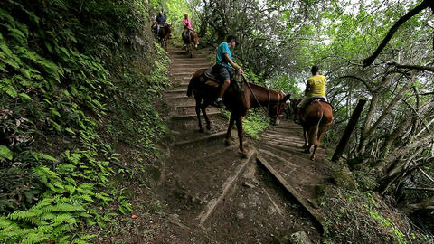 People ride horses along a narrow trail in Hawaii Stock Video Footage