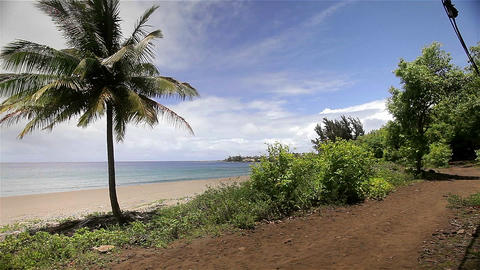 People ride horses beside the beach in Hawaii Stock Video Footage