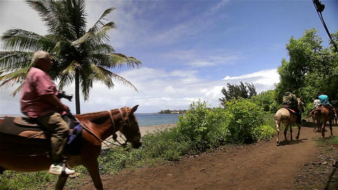 People ride horses beside the beach in Hawaii Stock Video Footage