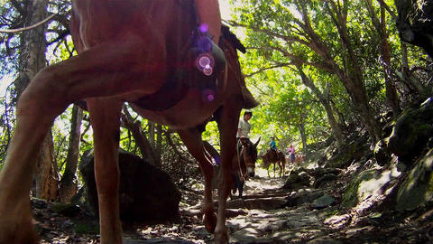 People ride horses through dense jungle in Hawaii Footage