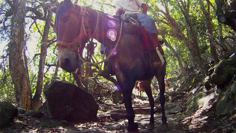 People ride horses through dense jungle in Hawaii Stock Video Footage