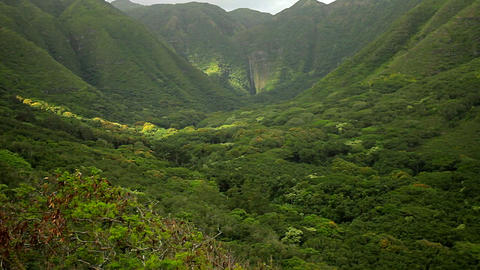 Slow zoom into dense jungle paradise in Hawaii Footage