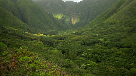 Slow zoom into dense jungle paradise in Hawaii Stock Video Footage