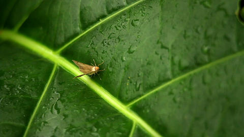A small moth on a green leaf Stock Video Footage