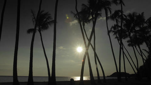 The sun or moon sets behind palm trees in time lap Stock Video Footage