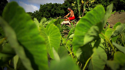A Hawaiian native sits in the field making poi Stock Video Footage