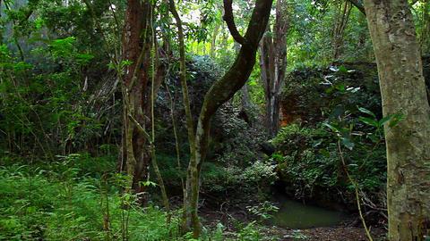 Pan across dense jungle rainforest Footage