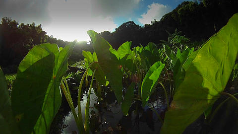 POV moving through a marsh or wetland Stock Video Footage
