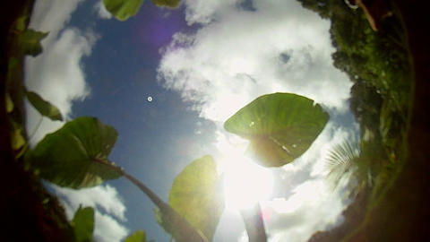POV from the bottom of a pond, pool or stream with Stock Video Footage