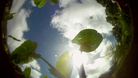 POV from the bottom of a pond, pool or stream with Footage