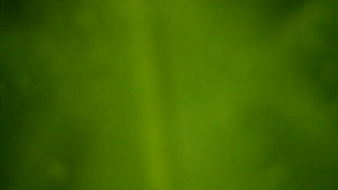 Rack focus through green plant showing water dropl Stock Video Footage