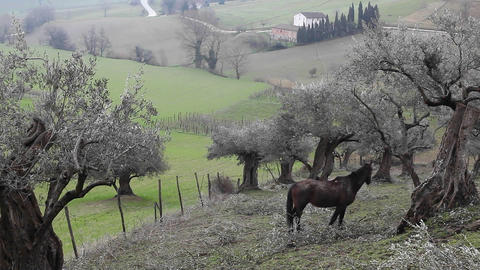 A horse grazes in a small hill near a green meadow Footage