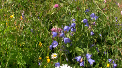 Fields of flowers are blooming in springtime Stock Video Footage