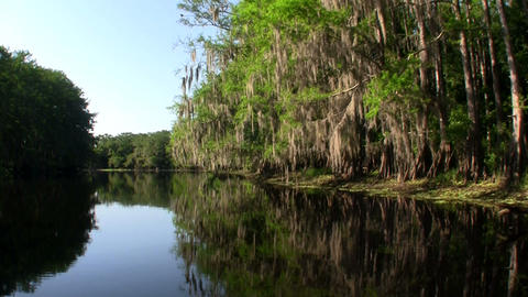 POV from a boat through the Florida Everglades Stock Video Footage