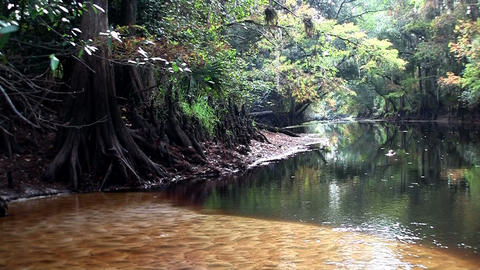 A shot of a mangrove forest deep in a swamp Stock Video Footage