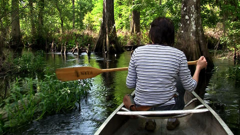POPV from a boat traveling through a mangrove swam Stock Video Footage