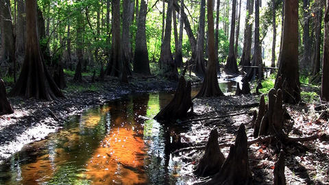 Stationary shot of a coffee colored swamp in the E Footage