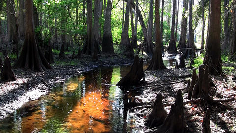 Stationary shot of a coffee colored swamp in the E Stock Video Footage