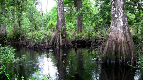 POV shot traveling through a swamp in the Everglad Stock Video Footage
