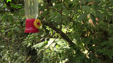 A hummingbird at a feeder Footage