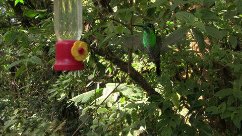 A hummingbird at a feeder Stock Video Footage
