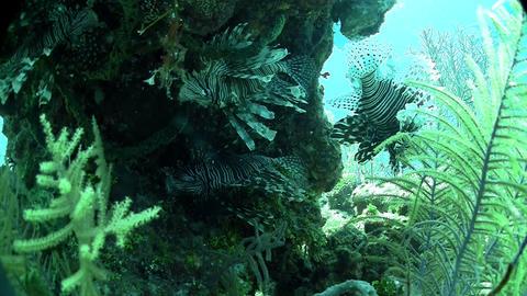Beautiful green underwater seascape Stock Video Footage