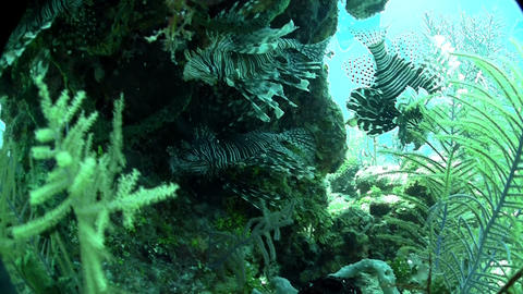 Beautiful green underwater seascape Footage