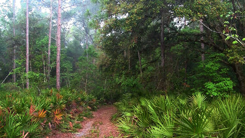 A path leads into an Everglades jungle scene Stock Video Footage