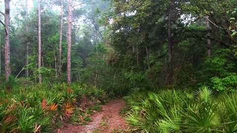 A path leads into an Everglades jungle scene Footage
