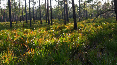 Grass and tress in the Florida Everglades Stock Video Footage