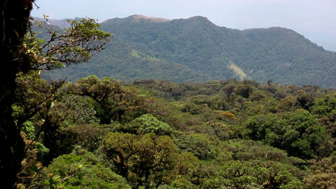 The Monteverde Cloud Forest reserve in Costa Rica Stock Video Footage
