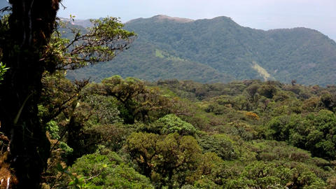 The Monteverde Cloud Forest reserve in Costa Rica Footage