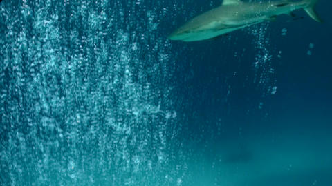 A shark swims underwater near a diver Stock Video Footage