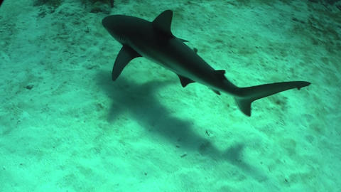 Good footage of a shark swimming underwater Footage