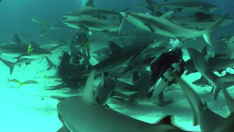 Good footage of many sharks swimming around a dive Footage
