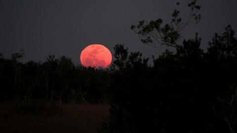 An orange moon rises behind a ridge Stock Video Footage